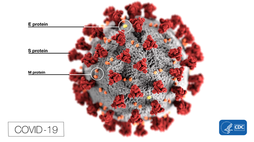 This illustration, created at the Centers for Disease Control and Prevention (CDC), reveals ultrastructural morphology exhibited by coronaviruses. Note the spikes that adorn the outer surface of the virus, which impart the look of a corona surrounding the virion, when viewed electron microscopically. In this view, the protein particles E, S, and M, also located on the outer surface of the particle, have all been labeled as well. A novel coronavirus, named Severe Acute Respiratory Syndrome coronavirus 2 (SARS-CoV-2), was identified as the cause of an outbreak of respiratory illness first detected in Wuhan, China in 2019. The illness caused by this virus has been named coronavirus disease 2019 (COVID-19).
